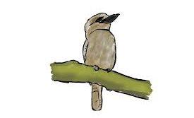 Year 5 Kookaburras